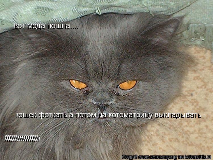 Котоматрица: вот мода пошла.... кошек фоткать а потом на котоматрицу выкладывать \\\\\\\\ ////////////////