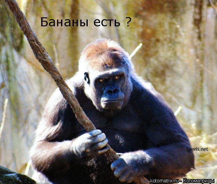 Котоматрица: Бананы есть ?