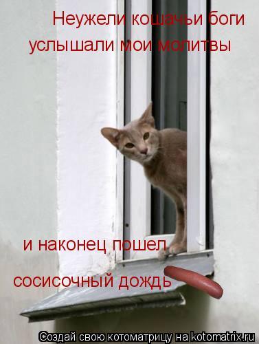Котоматрица: Неужели кошачьи боги  услышали мои молитвы и наконец пошел  сосисочный дождь