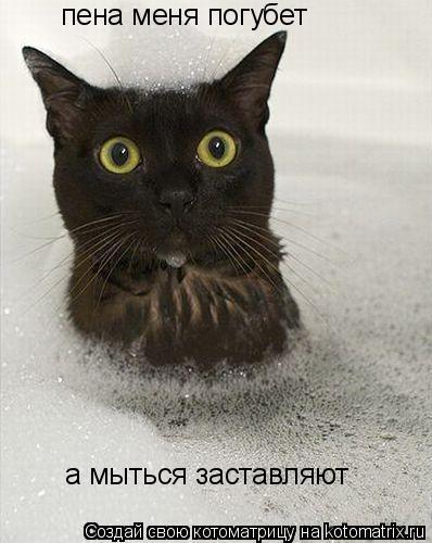 Котоматрица: пена меня погубет а мыться заставляют