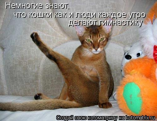 Котоматрица: Немногие знают Немногие знают,  что кошки как и люди каждое утро  делают гимнастику