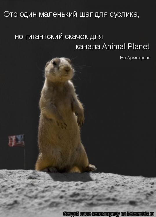 Котоматрица: Это один маленький шаг для суслика,  но гигантский скачок для  канала Animal Planet Не Армстронг