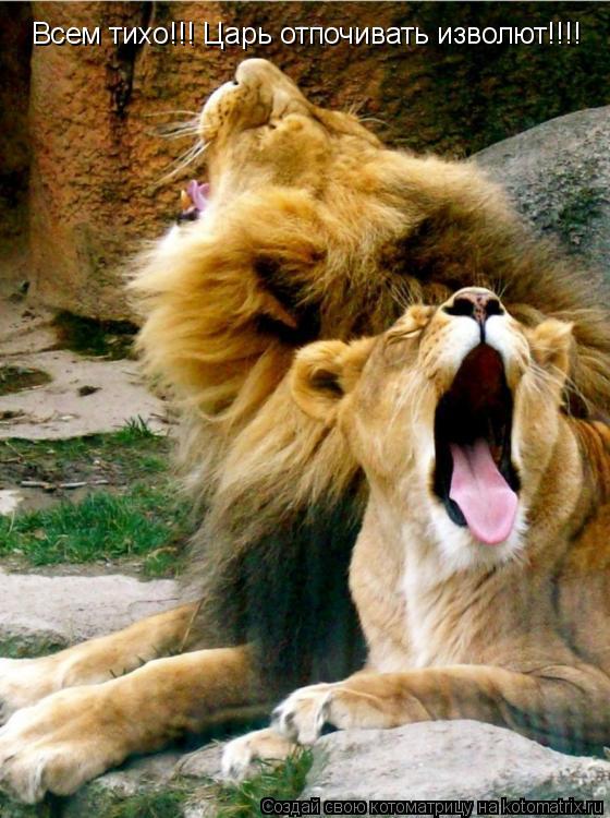 Котоматрица: Всем тихо!!! Царь отпочивать изволют!!!!