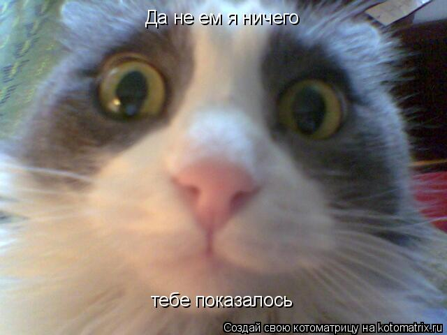 Котоматрица: Да не ем я ничего тебе показалось