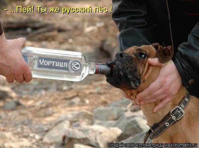 Котоматрица: - ...Пей! Ты же русский пёс !