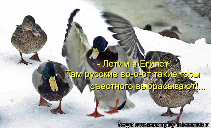 Котоматрица: - Летим в Египет! Там русские во-о-от такие горы съестного выбрасывают!...