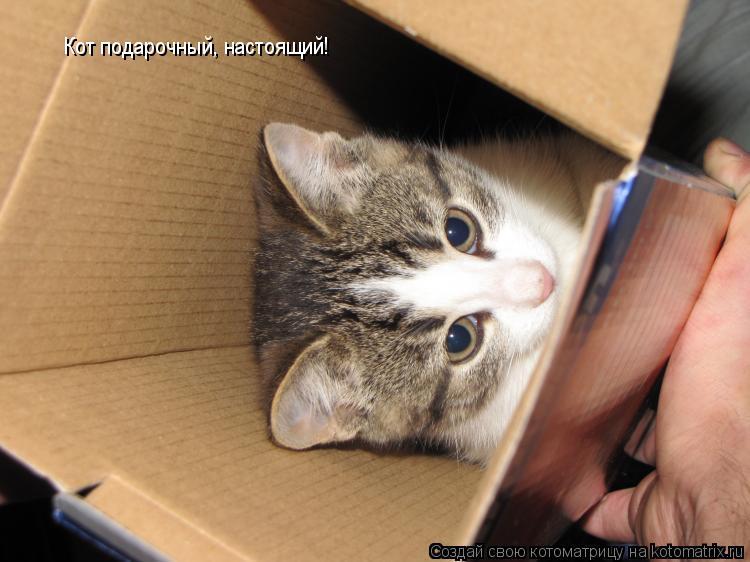 Котоматрица: Кот подарочный, настоящий!