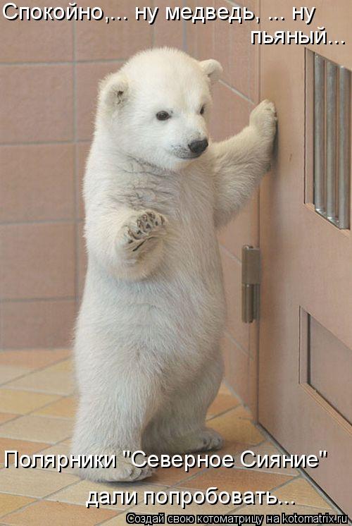 """Котоматрица: Спокойно,... ну медведь, ... ну пьяный... Полярники """"Северное Сияние"""" дали попробовать..."""