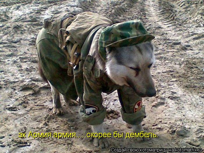 Котоматрица: эх Армия армия.....скорее бы дембель.