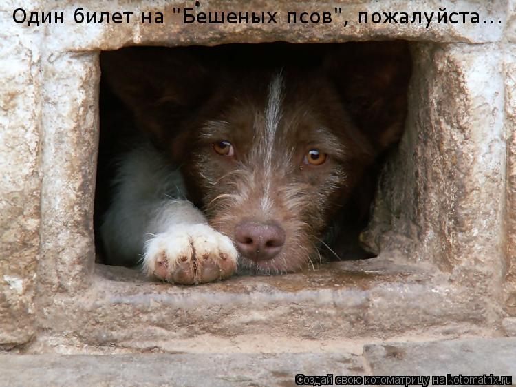 """Котоматрица: Один билет на """"Бешеных псов"""", пожалуйста..."""