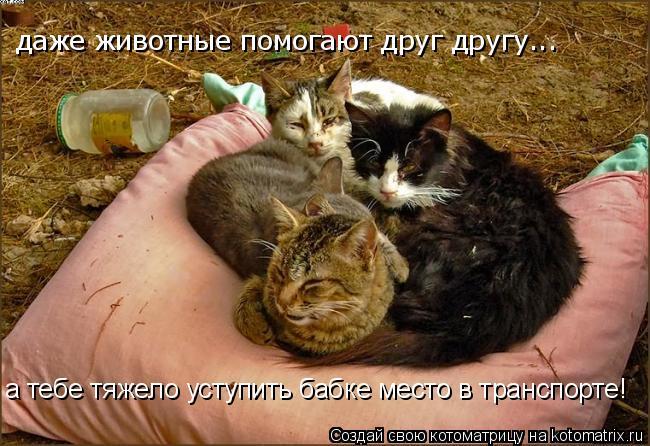 Котоматрица: даже животные помогают друг другу... а тебе тяжело уступить бабке место в транспорте!