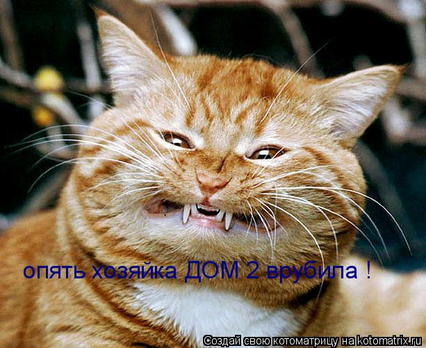 Котоматрица: опять хозяйка ДОМ 2 врубила !