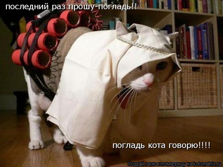 Котоматрица: последний раз прошу-погладь!! погладь кота говорю!!!!