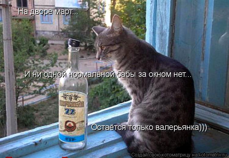 Котоматрица: На дворе март... И ни одной нормальной бабы за окном нет... Остаётся только валерьянка)))