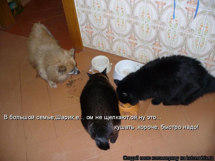Котоматрица: В большой семье,Шарик,е... ом не щелкают,ой,ну это... кушать ,короче, быстро надо!