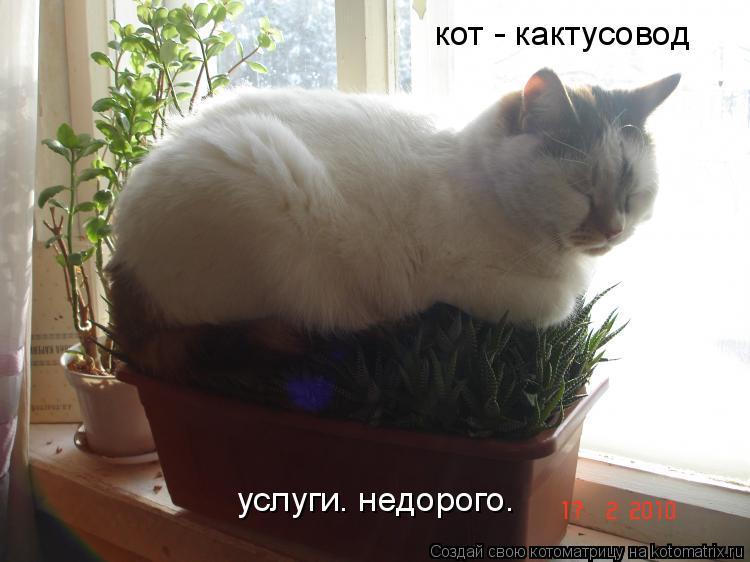 Котоматрица: кот - кактусовод услуги. недорого.