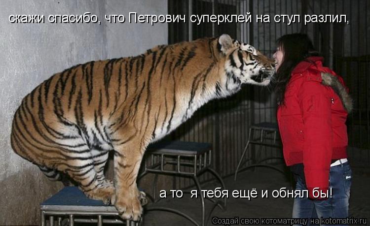 Котоматрица: скажи спасибо, что Петрович суперклей на стул разлил,  а то  я тебя ещё и обнял бы!
