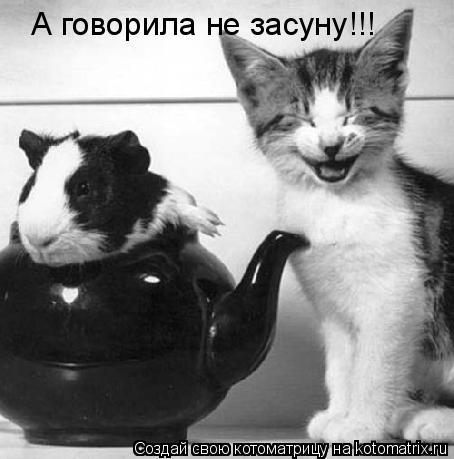 Котоматрица: А говорила не засуну!!!
