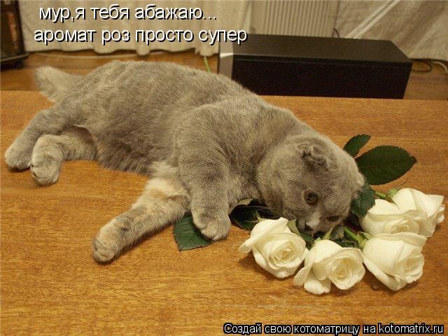 Котоматрица: мур,я тебя абажаю... аромат роз просто супер
