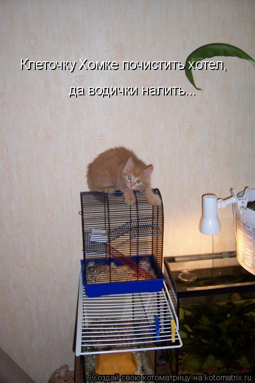 Котоматрица: Клеточку Хомке почистить хотел, да водички налить...
