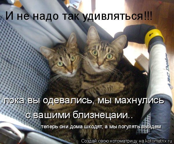 Котоматрица: пока вы одевались, мы махнулись  с вашими близнецаии.. теперь они дома шкодят, а мы погулять выйдем И не надо так удивляться!!!