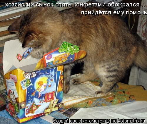 Котоматрица: хозяйский сынок опять конфетами обожрался... прийдётся ему помочь