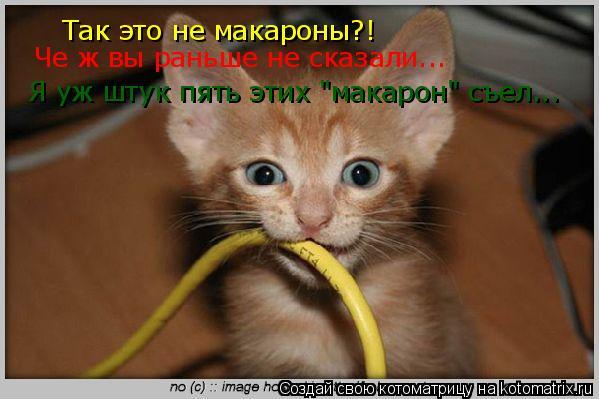 """Котоматрица: Так это не макароны?! Че ж вы раньше не сказали... Я уж штук пять этих """"макарон"""" съел..."""