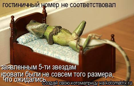 Котоматрица: гостиничный номер не соответствовал заявленным 5-ти звездам кровати были не совсем того размера, что ожидались...