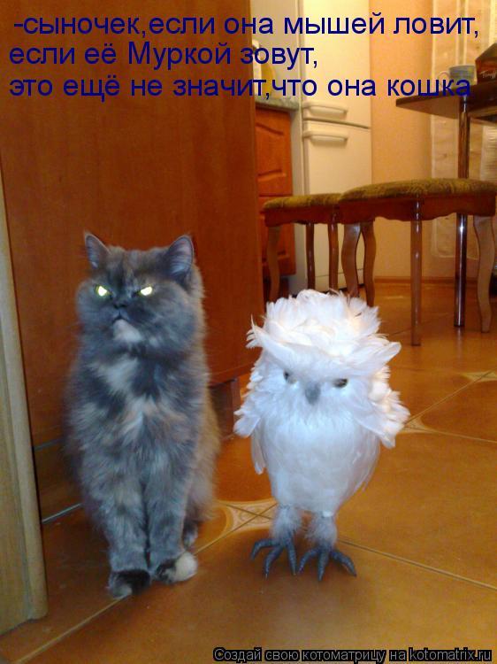 Котоматрица: -сыночек,если она мышей ловит, если её Муркой зовут, это ещё не значит,что она кошка