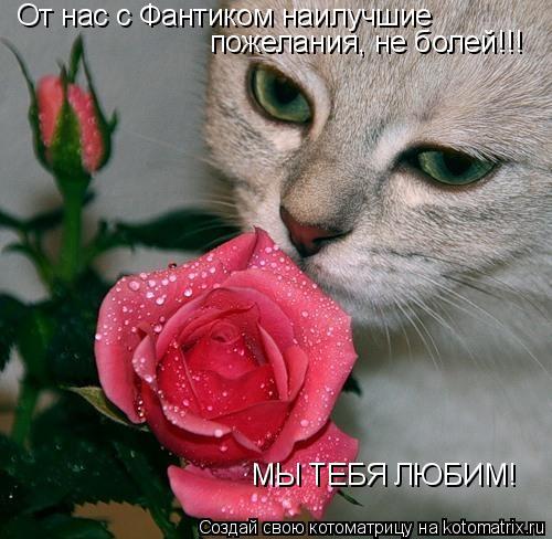 Котоматрица: От нас с Фантиком наилучшие пожелания, не болей!!! МЫ ТЕБЯ ЛЮБИМ!