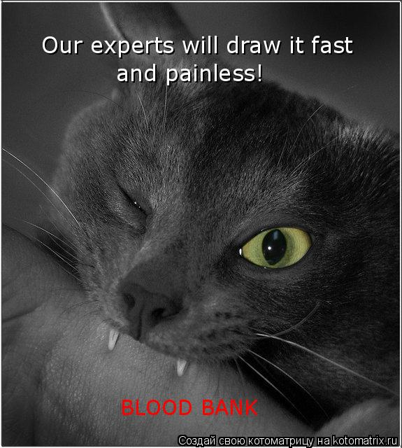 Котоматрица: Our experts will draw it fast and painless! BLOOD BANK