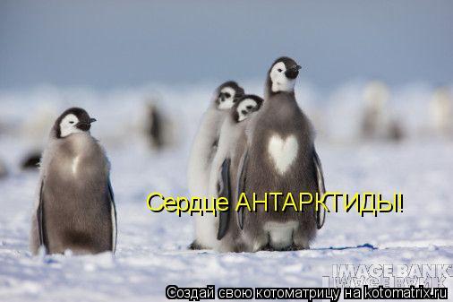 Котоматрица: Сердце АНТАРКТИДЫ!