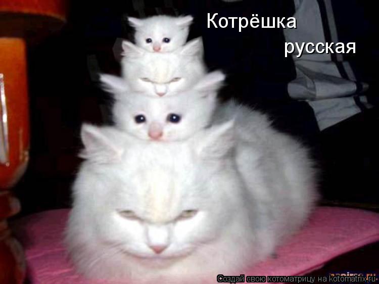 Котоматрица: Котрёшка русская