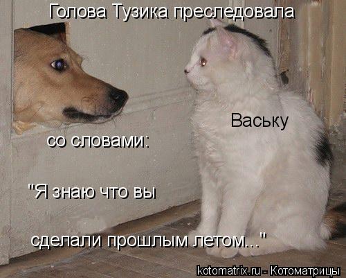 """Котоматрица: Голова Тузика преследовала Ваську со словами: сделали прошлым летом..."""" """"Я знаю что вы"""