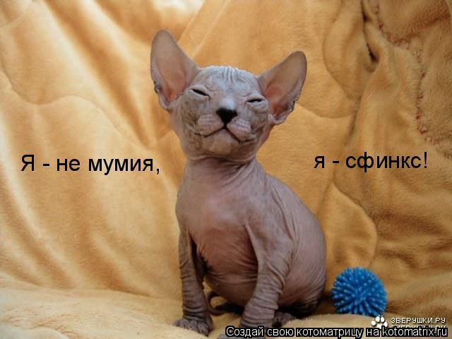 Котоматрица: Я - не мумия, я - сфинкс!