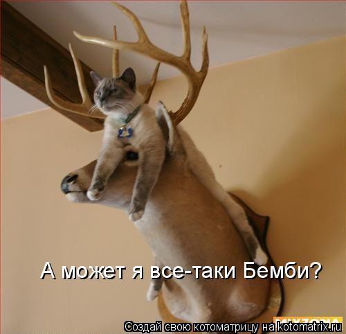 Котоматрица: А может я все-таки Бемби?
