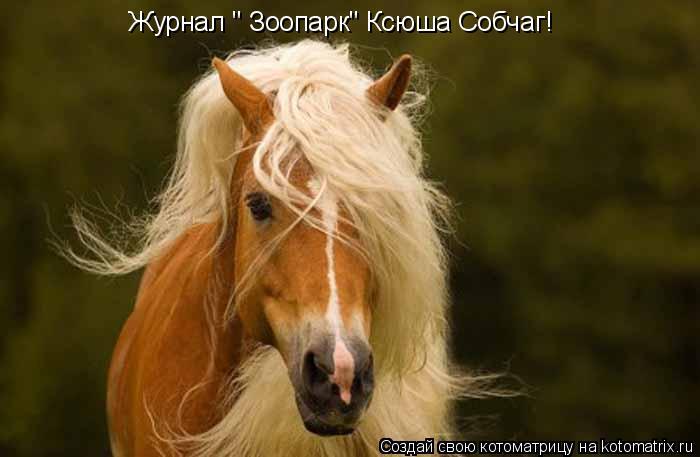 "Котоматрица: Журнал "" Зоопарк"" Ксюша Собчаг!"