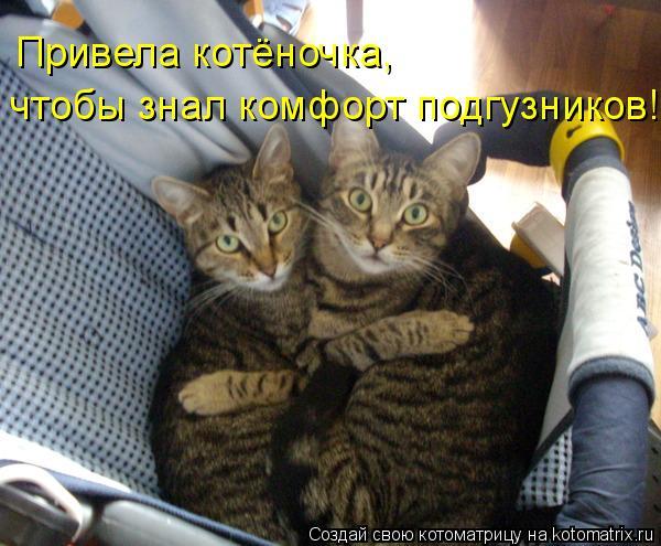 Котоматрица: Привела котёночка, чтобы знал комфорт подгузников!