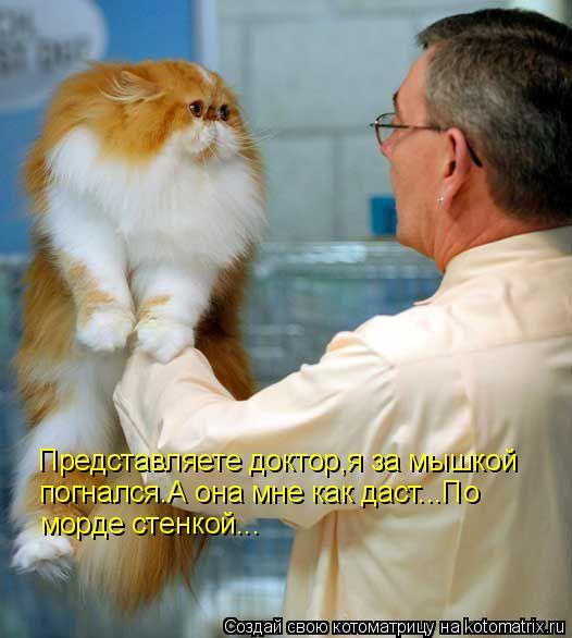 Котоматрица: Представляете доктор,я за мышкой погнался.А она мне как даст...По морде стенкой...