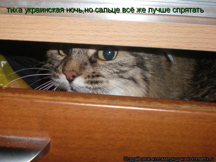Котоматрица: тиха украинская ночь,но сальце всё же лучше спрятать
