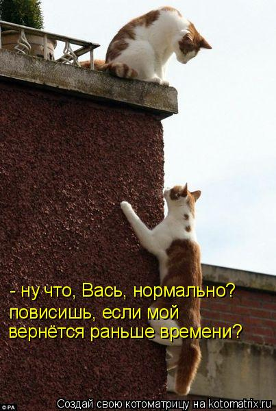 Котоматрица: - ну что, Вась, нормально? повисишь, если мой вернётся раньше времени?