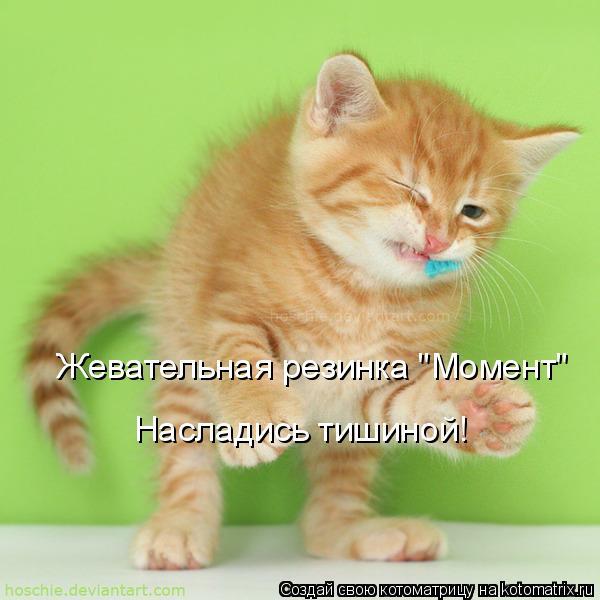 """Котоматрица: Жевательная резинка """"Момент"""" Насладись тишиной!"""
