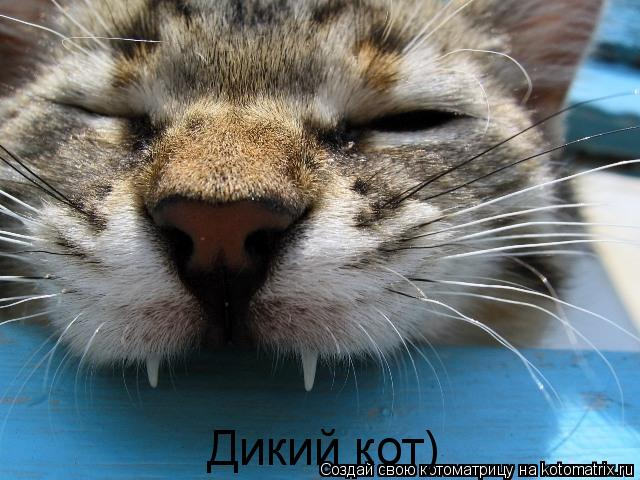 Котоматрица: Дикий кот)