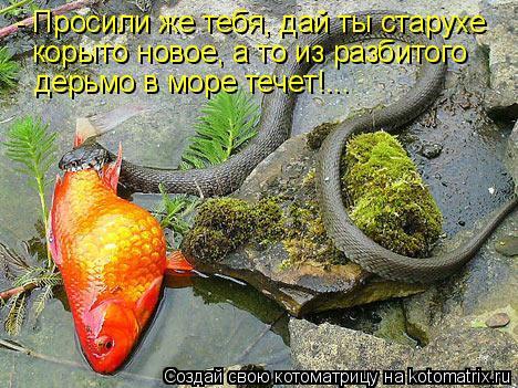 Котоматрица: - Просили же тебя, дай ты старухе корыто новое, а то из разбитого дерьмо в море течет!...