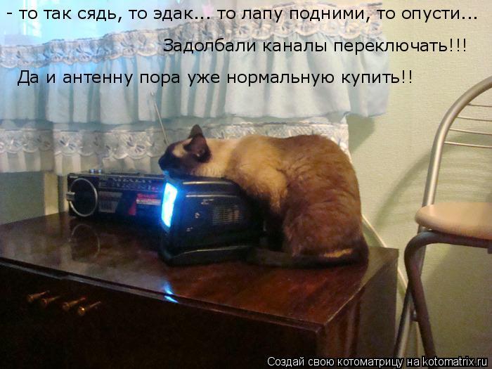 Котоматрица: - то так сядь, то эдак... то лапу подними, то опусти... Задолбали каналы переключать!!! Да и антенну пора уже нормальную купить!!