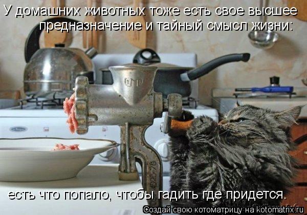 Котоматрица: У домашних животных тоже есть свое высшее  предназначение и тайный смысл жизни: есть что попало, чтобы гадить где придется.