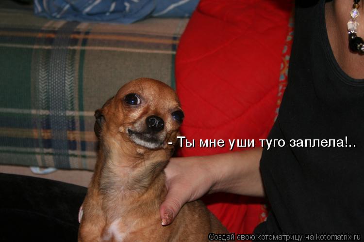 Котоматрица: - Ты мне уши туго заплела!..