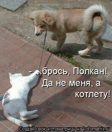 Котоматрица: - ...брось, Полкан! Да не меня, а  котлету!