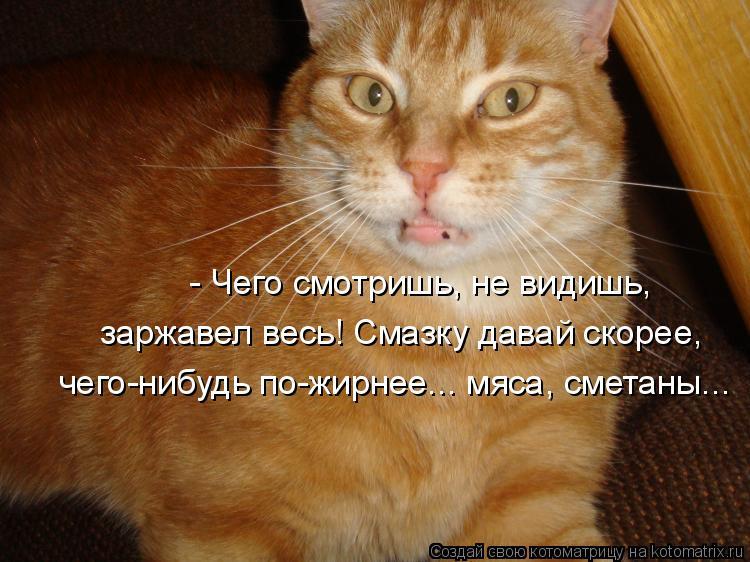 Котоматрица: - Чего смотришь, не видишь, заржавел весь! Смазку давай скорее, чего-нибудь по-жирнее... мяса, сметаны...