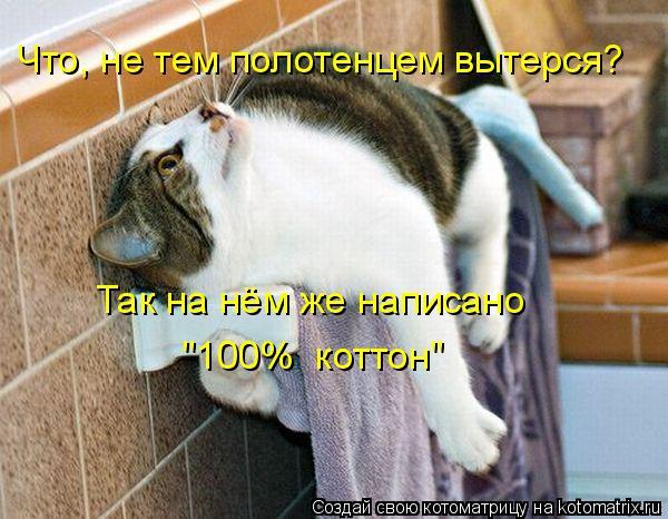 """Котоматрица: Что, не тем полотенцем вытерся? Так на нём же написано  """"100%  коттон"""""""